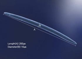※(1)棘状スポンジアのイメージ図