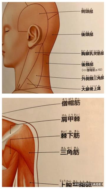 筋肉の一覧